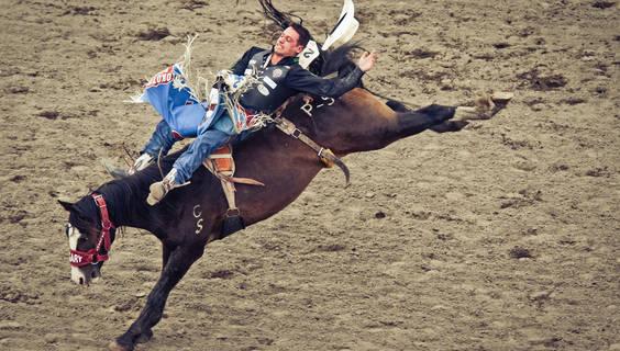 Kampf Mann gegen Pferd - meist gewinnt das Pferd.  © Calgary Stampede